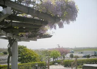 藤棚―空港北公園