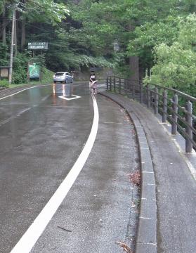 田沢湖61