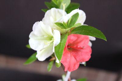緑花の泉213