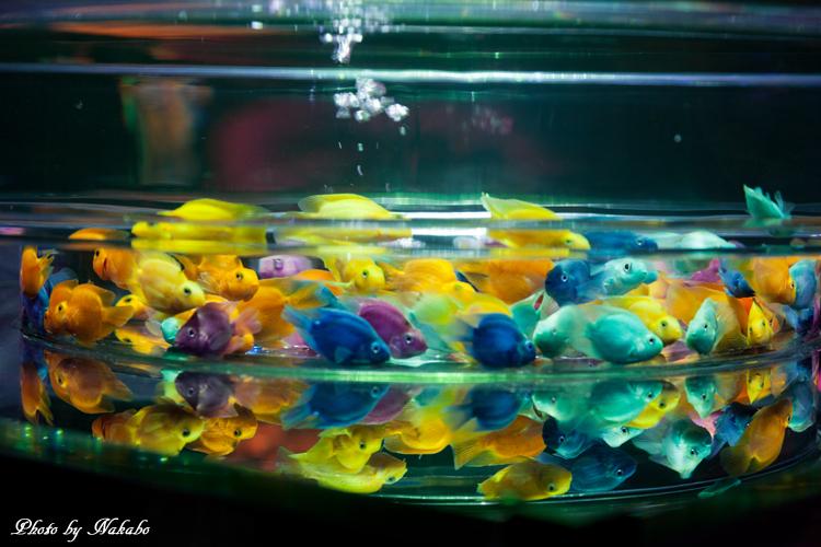Art_Aquarium_2013-1.jpg