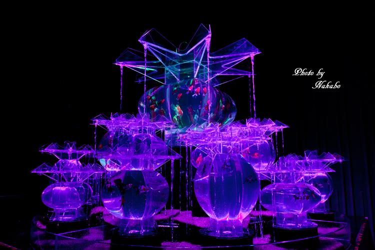 Art_Aquarium_2013-13.jpg