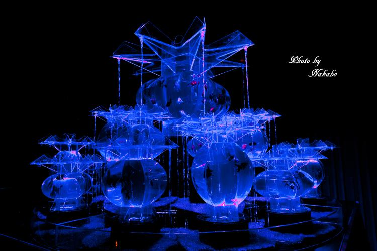Art_Aquarium_2013-14.jpg