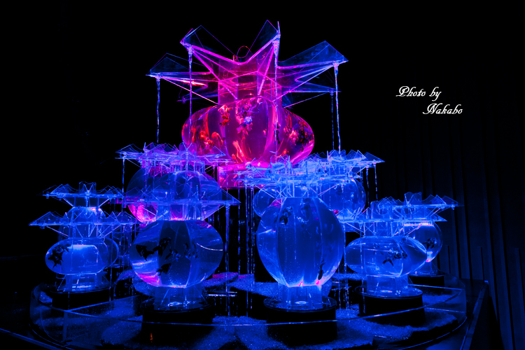 Art_Aquarium_2013-15.jpg
