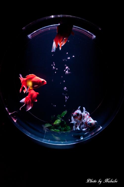Art_Aquarium_2013-18.jpg