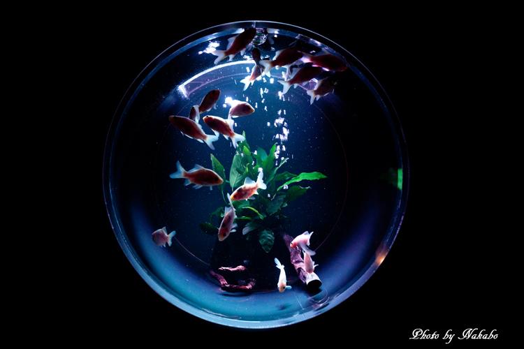 Art_Aquarium_2013-19.jpg