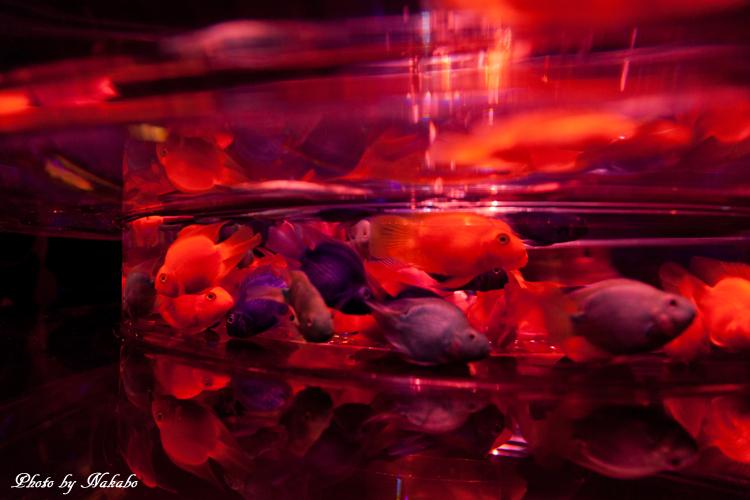 Art_Aquarium_2013-2.jpg