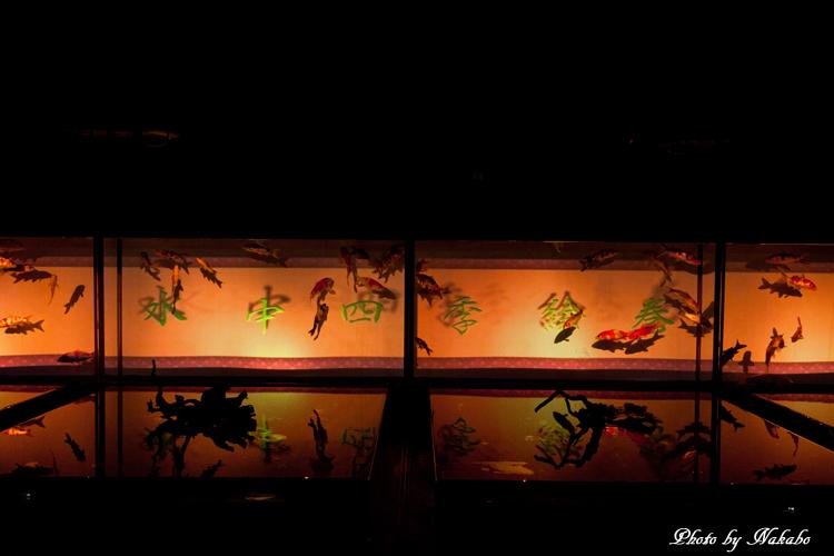 Art_Aquarium_2013-21.jpg