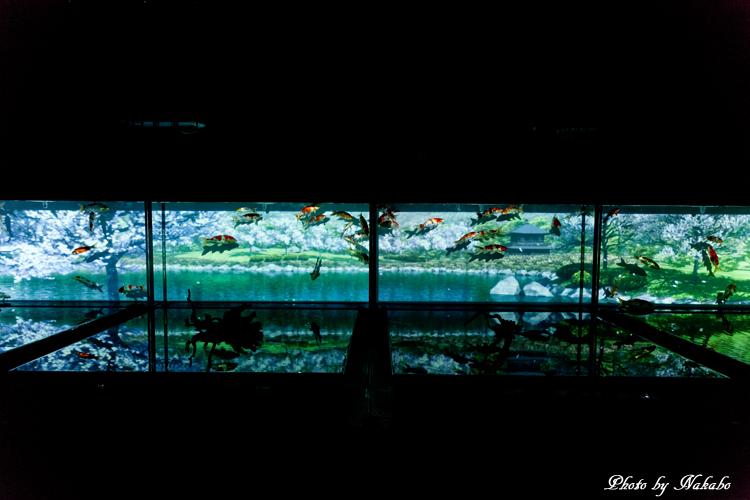Art_Aquarium_2013-22.jpg