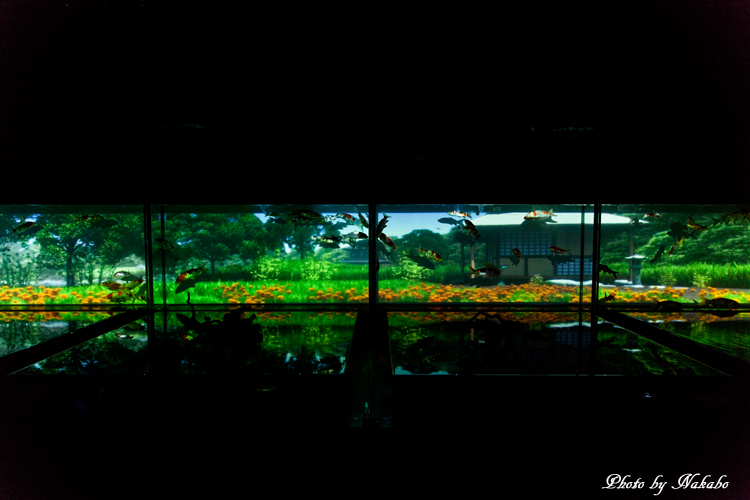Art_Aquarium_2013-23.jpg