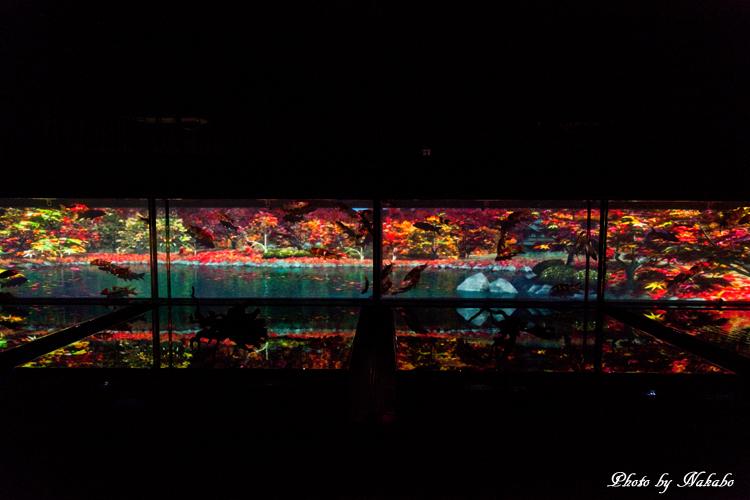 Art_Aquarium_2013-25.jpg