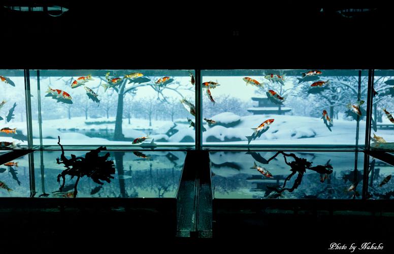 Art_Aquarium_2013-26.jpg