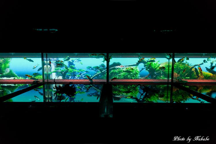 Art_Aquarium_2013-27.jpg
