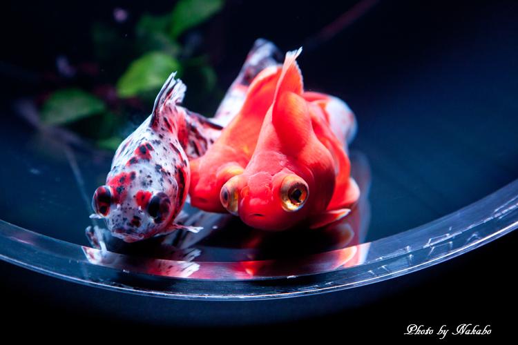 Art_Aquarium_2013-34.jpg