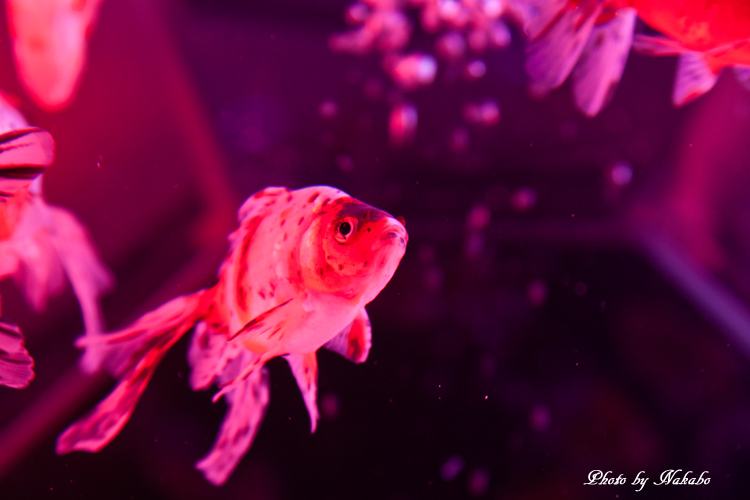 Art_Aquarium_2013-37.jpg