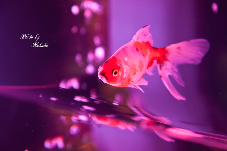 Art_Aquarium_2013-39.jpg