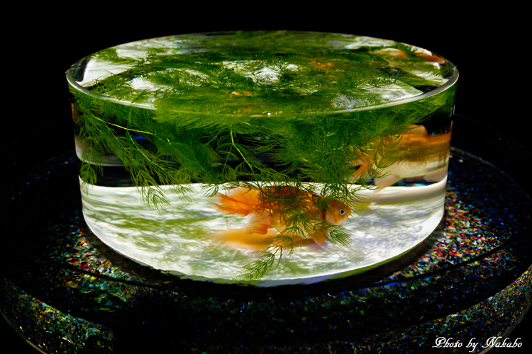 Art_Aquarium_2013-40.jpg