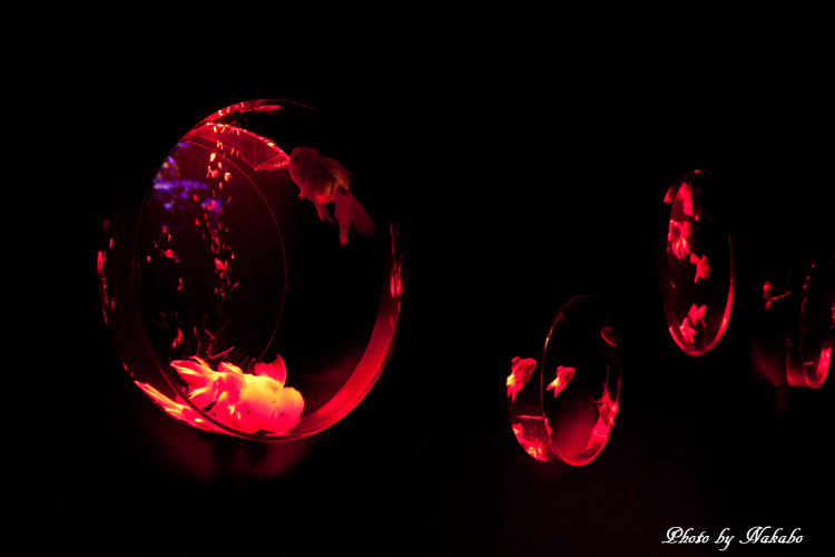 Art_Aquarium_2013-43.jpg
