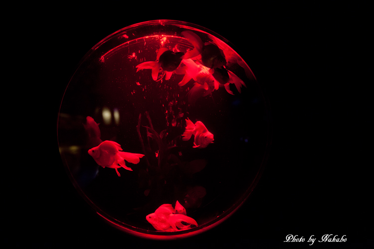 Art_Aquarium_2013-44.jpg