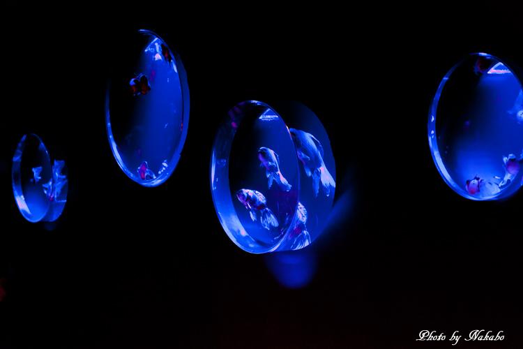 Art_Aquarium_2013-45.jpg