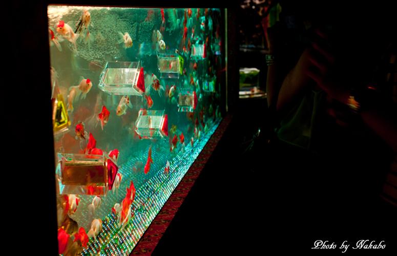 Art_Aquarium_2013-5.jpg
