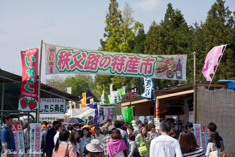 Chichibu_Shibazakura_25.jpg