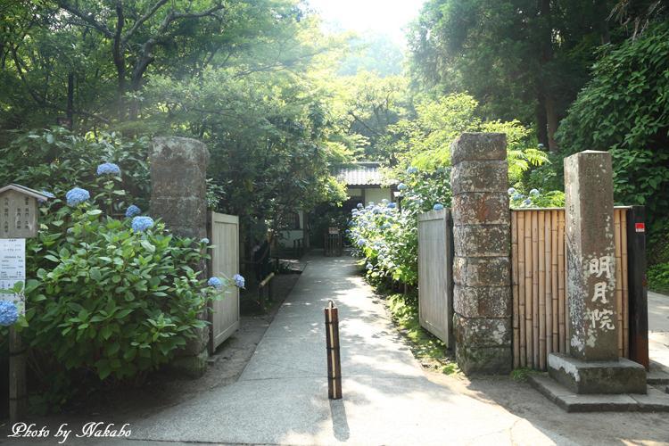 Kamakura_Ajisai_1.jpg