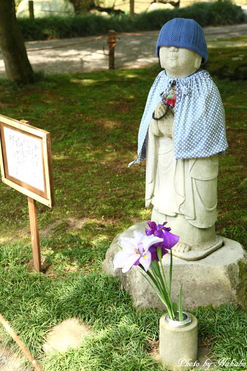 Kamakura_Ajisai_10.jpg