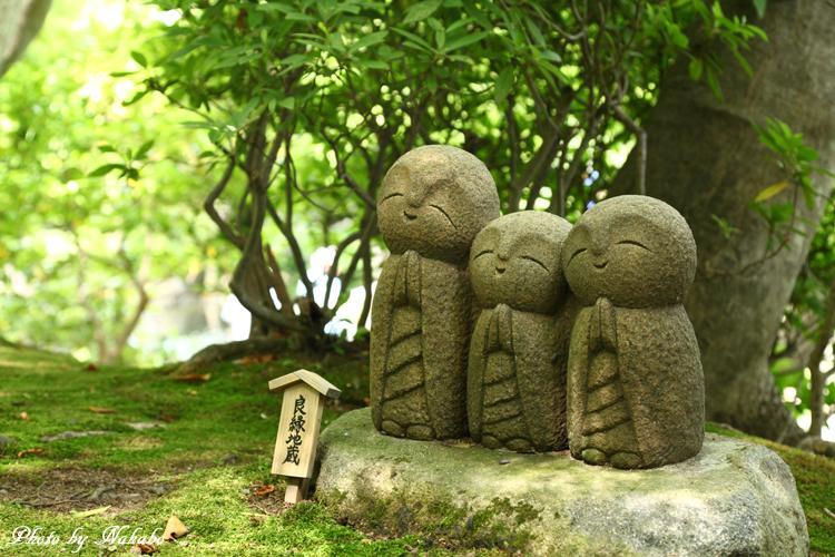Kamakura_Ajisai_22.jpg
