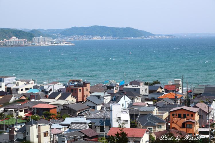 Kamakura_Ajisai_34.jpg