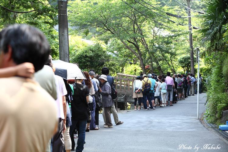 Kamakura_Ajisai_43.jpg