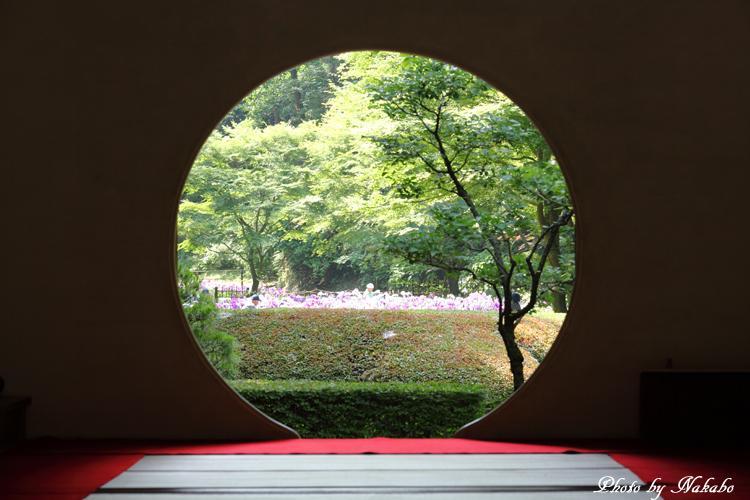 Kamakura_Ajisai_5.jpg