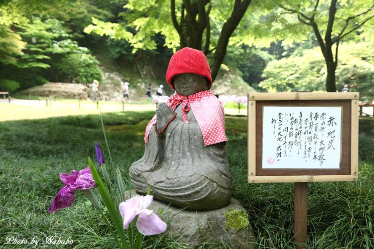 Kamakura_Ajisai_9.jpg
