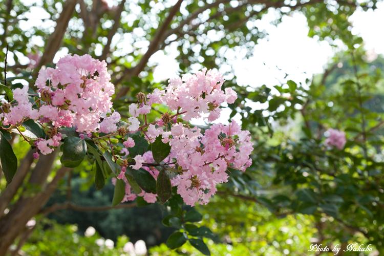 Kanazawa_2013_33.jpg