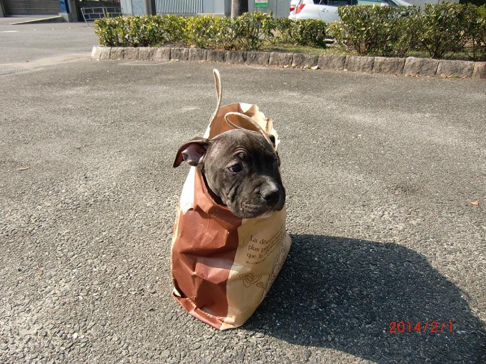 フレディは袋の中