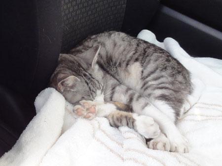 お昼寝は車の中4