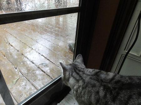 いきなり雨!1