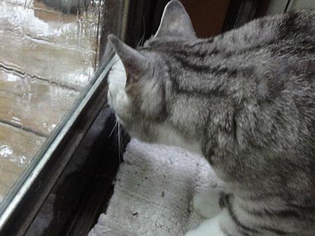 いきなり雨!2