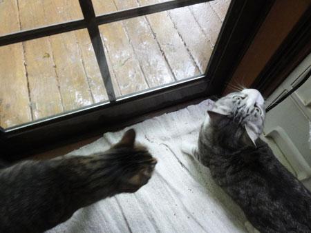 いきなり雨!4