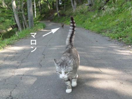 お散歩、お散歩1