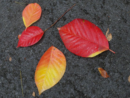 秋のお散歩1