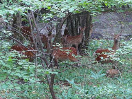 牡鹿のシーズン2