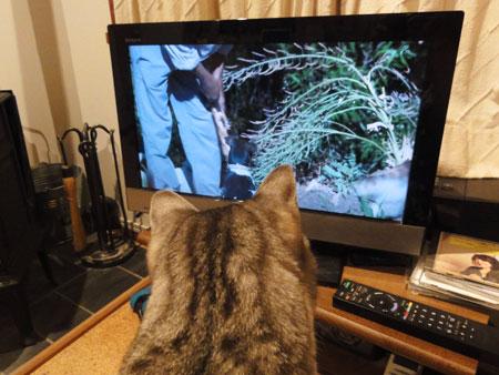 雨の夜はテレビ1