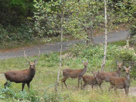 牡鹿のシーズン1