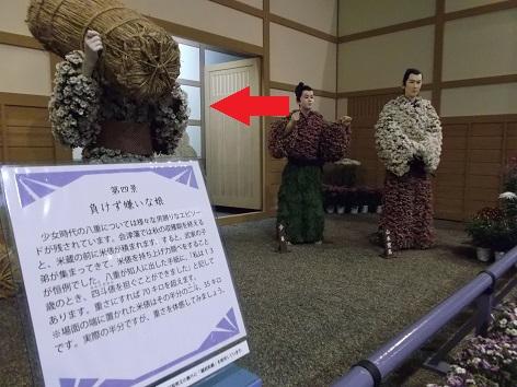 菊人形2013 2日目 (13)