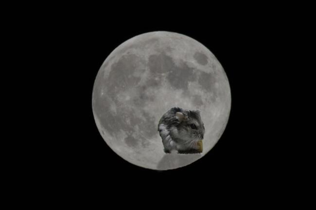 もん太&満月