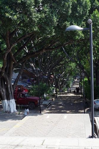 s-オアハカ街歩き (19)