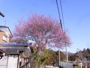 R0743032.jp<br />g