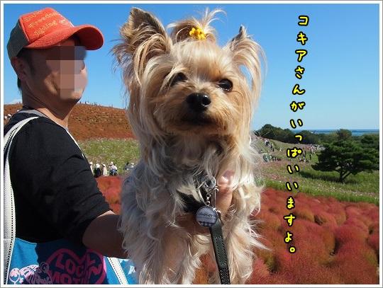 PA134678_20131014151505c1e.jpg