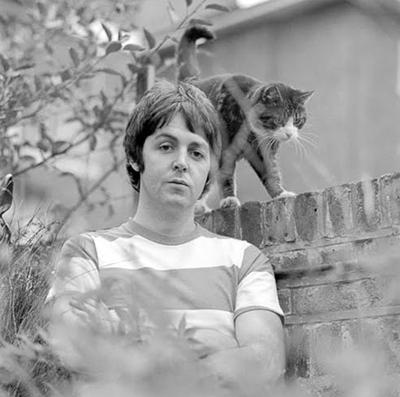 PaulMcCartney_cat