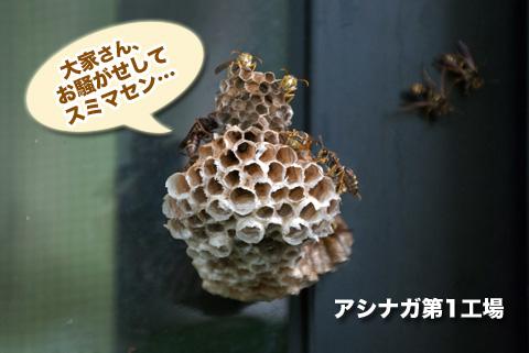 ashinaga1_082413